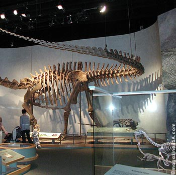 Denver,Museum of Natural History