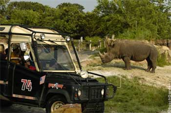 Image Result For Busch Gardens Serengeti Safari Tampa Fl