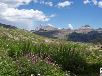 Wildblumen im Grand Teton